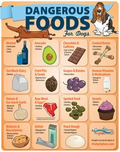 Dangerous Foods for Dogs (infographic)