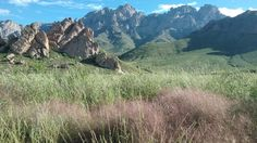 View of the organ mountains with wildflowers