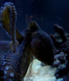 10 Non-Fish Aquarium Pets - Small Pets Tips & Advice mom.me