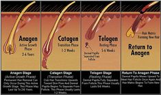 Hair is said to grow in three phases: Anagen, Catagen, Telogen .