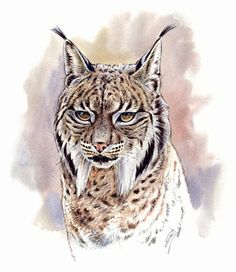 Big Cats Art, Cat Art, Animal Sketches, Animal Drawings, Iberian Lynx, Animal Stencil, Prehistoric Dinosaurs, Different Forms Of Art, Native American Pictures