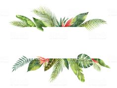 Watercolor banner fruit orange branch isolated on white background. Watercolor banner tropical leaves and branches isolated on white background. watercolor banner tropical leaves and branches isola Tropical Frames, Tropical Flowers, Summer Flowers, Tropical Background, Leaf Background, Hawaiian Flower Tattoos, Banner, Tropical Design, Flower Backgrounds