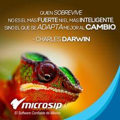 Quien sobrevive no es el más fuerte, ni el más inteligente, sino el que se adapta mejor al cambio. (Charles Darwin)