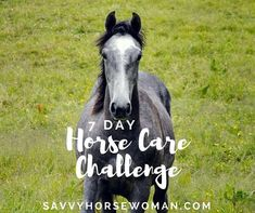 This fun challenge gives you 7 days of tips, advice and motivation!It's designed for all horse owners, from beginner to advanced, who want to: Step up their horse care routine.Declutter the barn, simplify, and save money.Get motivated to set new goals and make positive changes!Includes 3 FREE Printable worksheets to keep you on track, access to the Private Facebook Group Horse Care On a Budget, plus lots of helpful content from SavvyHorsewoman.comNote: This eBook is included for FREE with… Horse Care Tips, Positive Changes, Gifts For Horse Lovers, Horse Quotes, Fun Challenges, Horseback Riding, Printable Worksheets, Free Printable, Equestrian