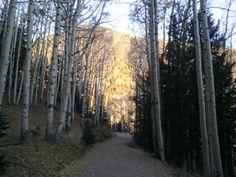 Aspen's in Lockett Meadow, Mt. Aspen, Country Roads, Nature, Plants, Naturaleza, Plant, Nature Illustration, Off Grid, Planets