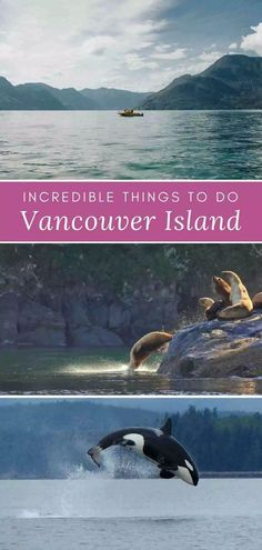 Check out these amazing, fun things to do in Sidney, B. - Canada's Vancouve. - Check out these amazing, fun things to do in Sidney, B. – Canada's Vancouver Island is brimm - Travel With Kids, Family Travel, Family Vacations, Whale Watching Tours, Canadian Travel, Vancouver Island, Romantic Travel, Sprays, Architecture