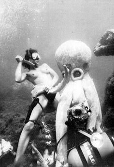 Octopus vs. Diver