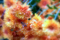 Honey Bee - Fall