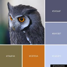 You're A Hoot Owl | Cool Color Palette Inspiration. | Digital Art Palette And Brand Color Palette.