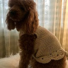 Winter Dog Sweater // Handmade Dog Clothes // Pet Clothing // Hand Knit Dog Sweater with Buttons // Dog outfit by BubaDog Small Dog Sweaters, Small Dog Clothes, Puppy Clothes, Crochet Dog Clothes, Crochet Dog Sweater, Custom Dog Shirts, Pull Crochet, Dog Carrier, Dog Harness