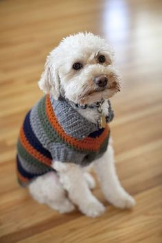 A bright and bold fun striped dog coat. Your little buddy will be the talk of the dog park. (Yarnspirations)