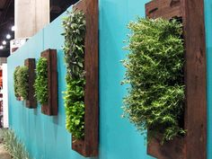 Really nice idea for decorating a garden wall to create an outdoor room area.  http://www.apartmenttherapy.com/the-best-of-vertical-gardening-inspiration-diy-resources-188013