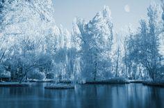 Lunar Dreams  by *SaraNekoChan