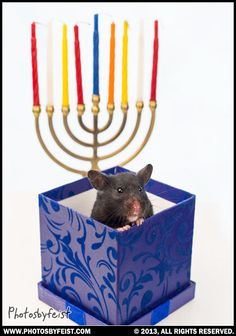 8 Best Jewish Pets Original Works Images It Works