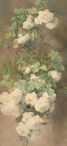 Old print of hanging white roses