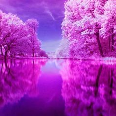 40 Beautiful Collection Of Infrared Photography For Your Inspiration All Nature, Amazing Nature, Infrared Photography, Art Photography, Beautiful World, Beautiful Images, Trees Beautiful, Fuerza Natural, Pink Trees