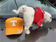 Georgia Bulldog Mascot, Georgia Bulldogs Football, Sec Football, Football Memes, Football Season, Giants Baseball, Football Baby, College Football, Uga Vs Tennessee