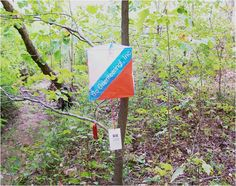 wish I could do this more - orienteering