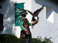 Falkner mit einem Weisskopfadler in der Burg Hohenwerfen (Österreich)