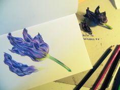 Fleur violette, crayons de couleurs.