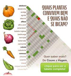 Plantas companheiras – tabela para horta caseira e calendário de plantio                                                                                                                                                                                 Mais