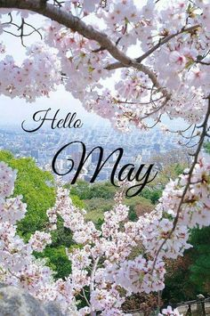 Find images and videos about flowers, hello and blossom on We Heart It - the app to get lost in what you love. Seasons Months, Days And Months, Months In A Year, 12 Months, Neuer Monat, Welcome May, Hello May, Sakura, New Month