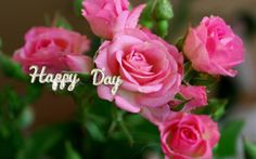 Attachment for Nature Wallpaper with Pink Rose Flower Pictures - HD Wallpapers Wallpaper 3840x2160, Flower Wallpaper, Nature Wallpaper, 1920x1200 Wallpaper, Rose Flower Pictures, Flower Images, Pink Rose Flower, Pink Flowers, Tropical Flowers