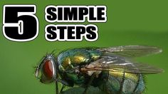How to Get Rid of Flies in The House Naturally With 5 Simple Steps Get Rid Of Flies, How To Get Rid, Nature, Youtube, Watch, Simple, Videos, House, Naturaleza