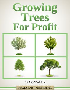Growing trees for profit is an ideal parttime or fulltime business for anyone who wants to be their own boss and enjoys being outdoors working with plants Trees are a pro. Growing Fruit Trees, Growing Tree, Growing Plants, Small Backyard Landscaping, Tropical Landscaping, Landscaping Ideas, Backyard Ideas, Garden Ideas, Backyard Plants