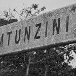 A collection of images taken at the Mtunzini Train Station Photography Blogs, Train Station, Image, Collection, Home Decor, Decoration Home, Room Decor, Interior Design, Home Interiors