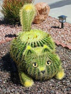 , kitty cats, cacti, garden art, pet, plants, gardens, topiari, kitti, cactus cat