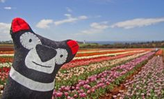 This is Tassie the Tasmanian Devil and he travels Tasmania discovering new places. This is Table Cape Tulip Farm, Wynyard Tasmania Tasmanian Devil, His Travel, Tulip, Cape, Places, Fictional Characters, Mantle, Cabo, Tulips