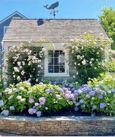 New England Cottage, New England Homes, Nantucket Cottage, Cottage Style, Nantucket Style, Cozy Cottage, Seaside Garden, Topiary Garden, Backyard Cottage