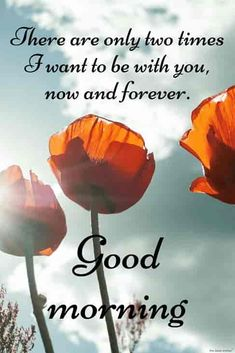 [Good morning love] Latest good morning images for love ~ Good morning inages Sweet Good Morning Images, Good Morning Romantic, Good Morning Flowers Pictures, Latest Good Morning Images, Good Morning Love Messages, Good Morning Handsome, Morning Quotes Images, Good Morning Images Download, Good Morning Picture