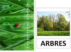 Vocabulari de primavera Web Gallery, Valencia, Spring, Tic Tac, Google, Albums, School, Ideas, Picasa