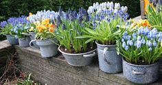 Old Utensils as Flower pots