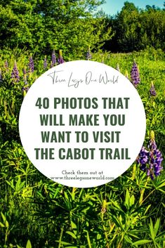 The Cabot Trail is one of the most scenic and beautiful drives that I've ever taken. There is a surprise around every corner. East Coast Canada, Cabot Trail, New England, Beautiful Places, Corner, Make It Yourself, Summer, How To Make, Photos