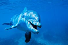 New understanding of the brains of animals shows that anthropomorphizing them isn't off base. Is a dolphin a person?