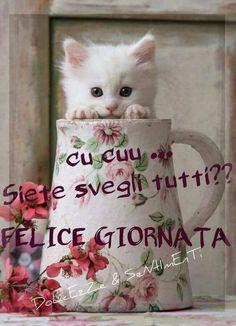 Cucu Good Night World, Good Morning Good Night, Good Afternoon, Good Day, Messages For Friends, Italian Phrases, Love Hug, Happy Anniversary, Animals Beautiful