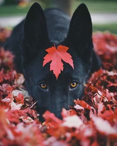 awwww! Cute!>>definitely Canadian pup. Can't convince me otherwise