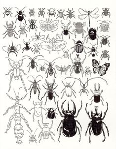 Insects and Myriapods at The American Museum of Natural History, by Jason Polan