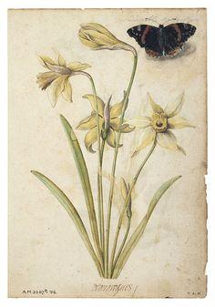 Le Moyne de Morgues, Jacques; ca. 1575