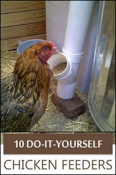 Easy and Clever Chicken Feeder Solutions Your Chicken Coop Must Have