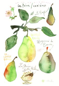 Pears Original watercolor painting Food art Kitchen decor Fruit Illustration Botanical french green drawing. $68.00, via Etsy.