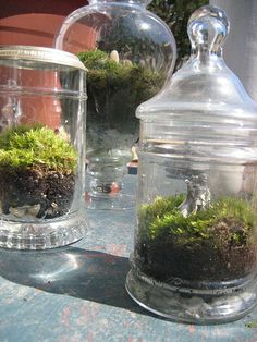 Moss terrariums by eat.grow.live., via Flickr