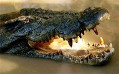 Crocodile facts: ten things you didn't know about crocodiles ...