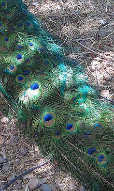 Around Town: Phoenix Zoo - PHX AZ