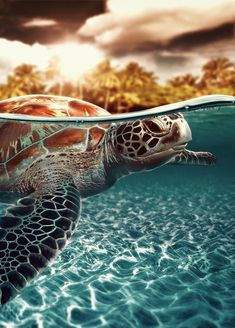 Sea Turtle - ©Geno Arguelles (via Behance)