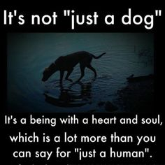 "Never EVER ""just a dog""! This is SO true. Dogs are so caring, so loving, so loyal and so smart! I love my dog Bella!"