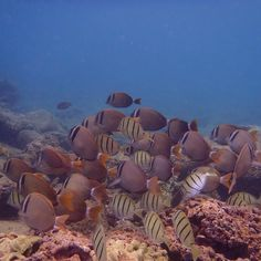 Like swimming in an aquarium  #travel #snorkel #fish #underwaterscene #submariner #tropical #swim #beachlife #oahu #hawaii #northshore #sharkscove #haleiwa #instatravel #travelsnaps